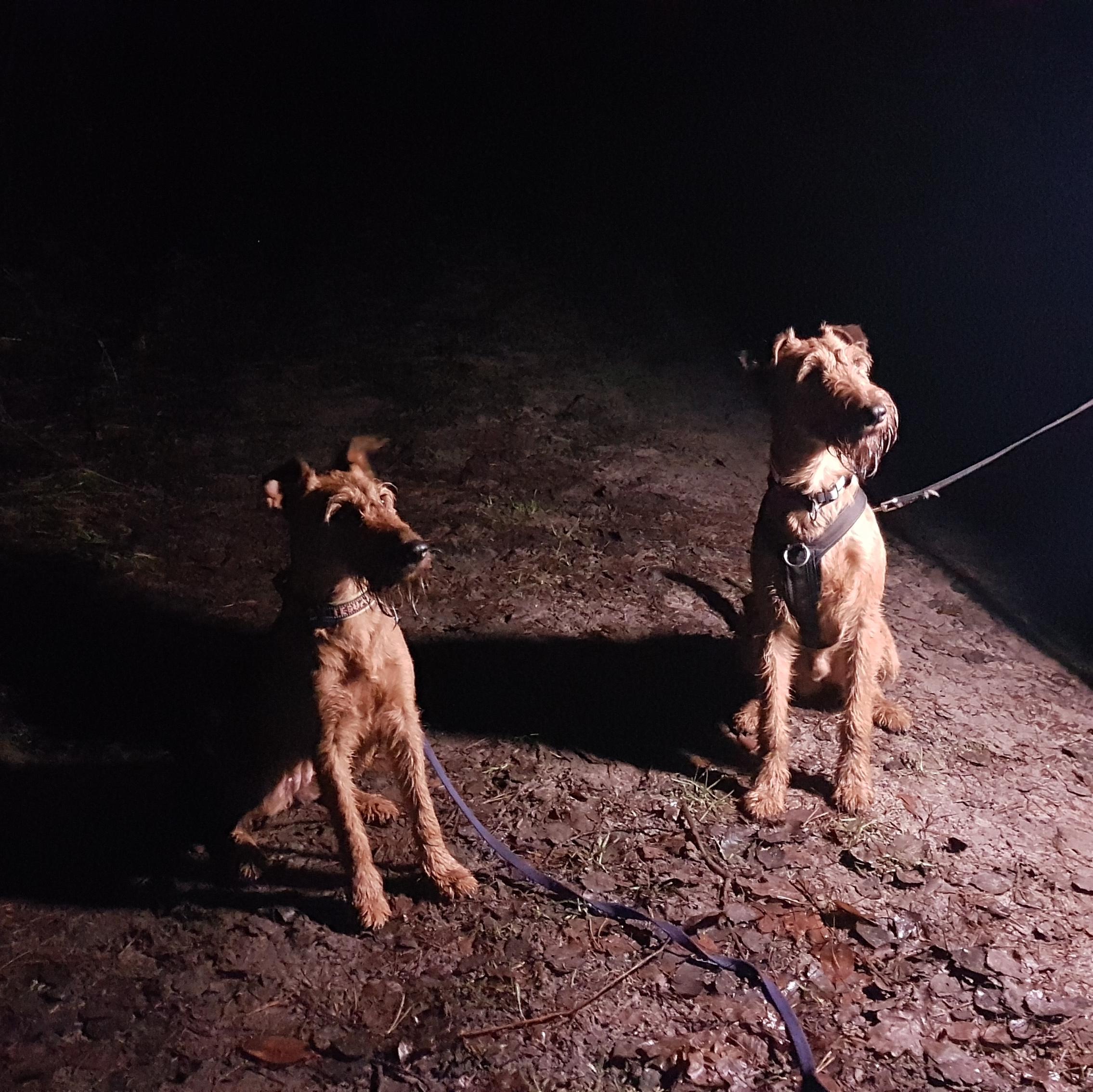 Nachtwanderung mit Gina
