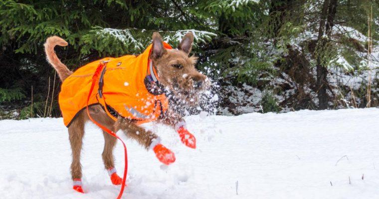 Jippie! Endlich Schnee
