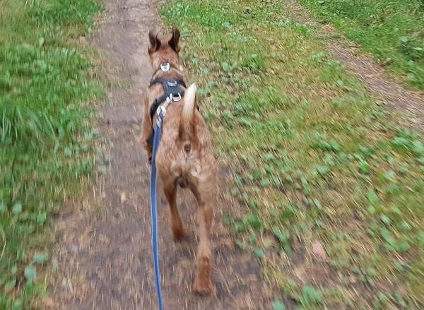 Lauftraining – jetzt mache ich mein Frauchen fit!