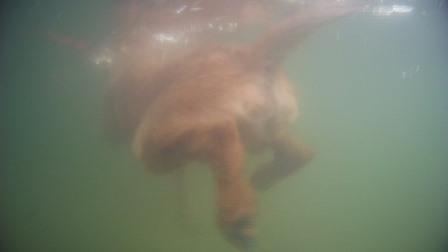Meine Badeanleitung