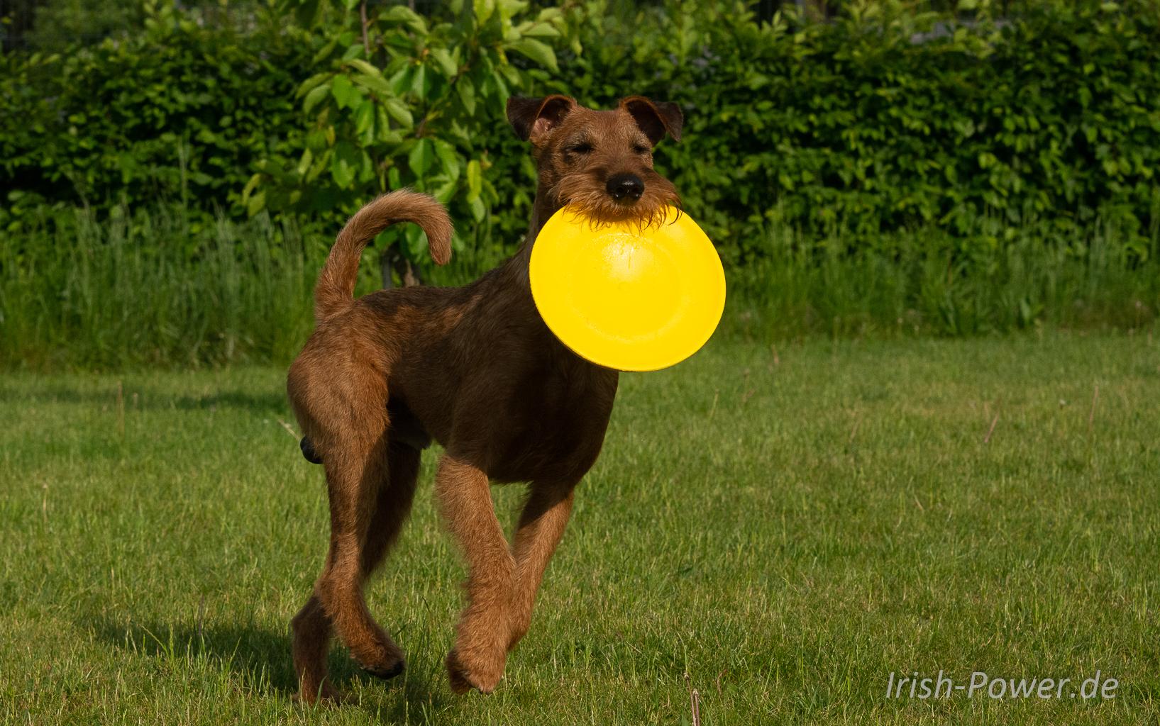 Frisbee fetzt